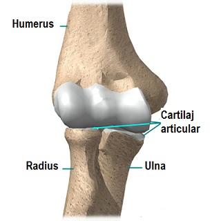 cum să tratezi inflamația articulației pe mână tratamentul artrozei genunchiului cu zăpadă
