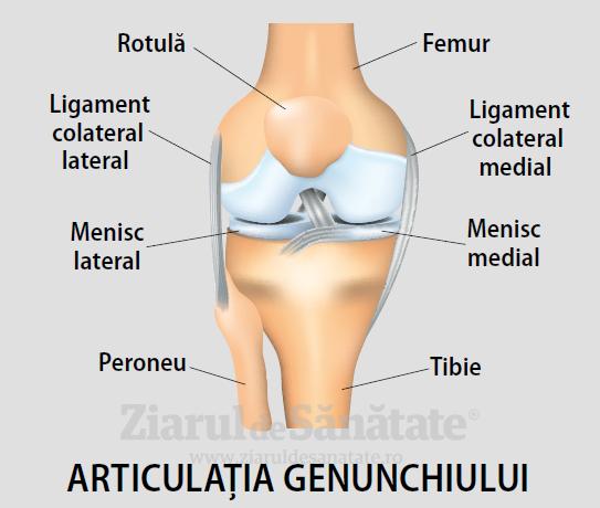 numărul de articulații la nivelul genunchiului durere în articulația picioarelor după operație pentru anesteziere