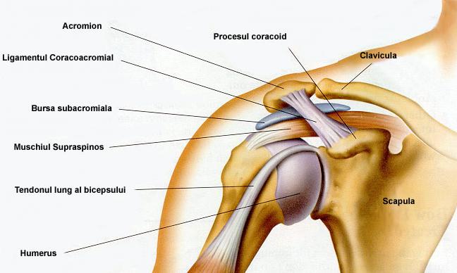 o durere de umăr sub articulație
