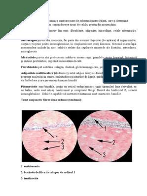 patologia articulației genunchiului