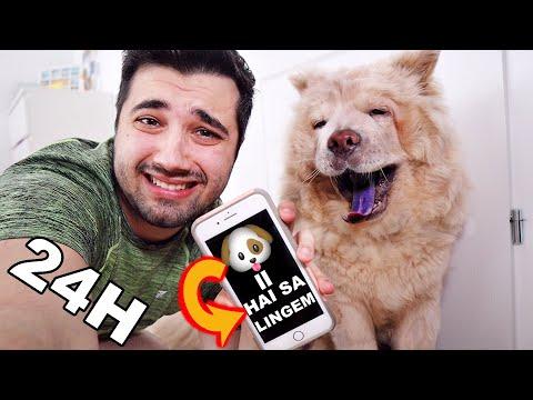 Artrita la câini: tratament, remedii naturale acasă, simptome
