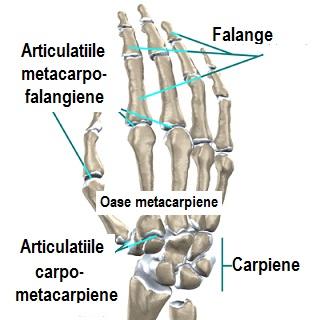 durere în articulația metacarpială a mâinii