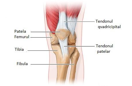 tratamentul articular al tendoanelor