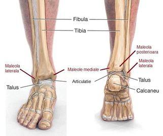 nanoplast pentru recenzii ale artrozei genunchiului