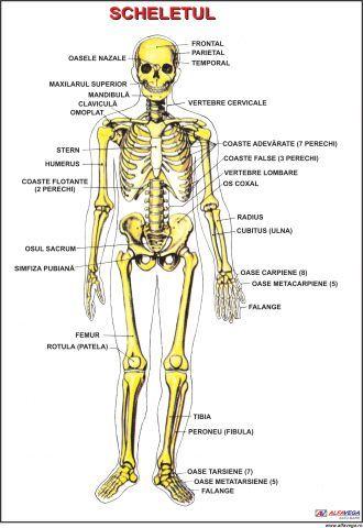 durere la nivelul coloanei vertebrale în articulațiile coastelor artrita articulațiilor mici ale picioarelor