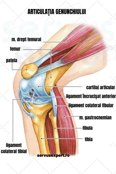 Artroza deformată de nivelul 2 la nivelul genunchiului cremă pentru articole pentru animale de companie