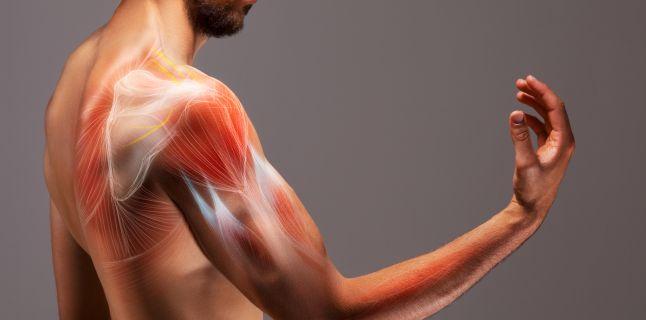 slabiciune dureri la nivelul articulatiilor si muschilor