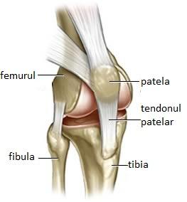 Olga Butakova căi de recuperare a articulațiilor dureri de genunchi și furnicături