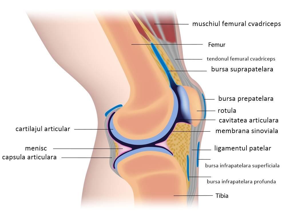 artroza articulației genunchiului comprimă boala articulației caprinei