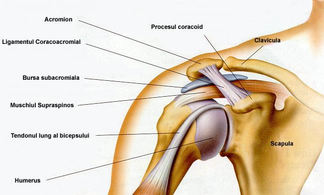 tratamentul unui nerv ciupit în articulația umărului