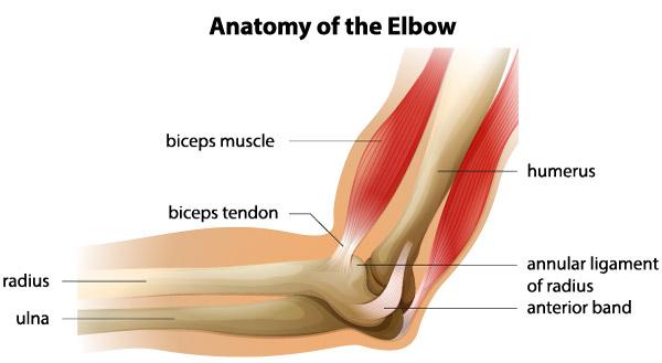 tratamentul articulației cotului după fractură fasciita durerii articulare