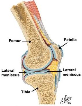 durerea în toate articulațiile a crescut bilirubina
