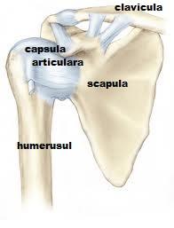 dureri articulare umăr lăsat ce să facă dureri articulare cauzate de infecție
