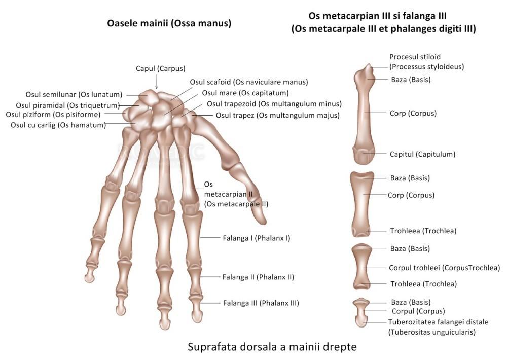 articulația degetelor inelare doare artroza regimului de tratament al articulațiilor umărului