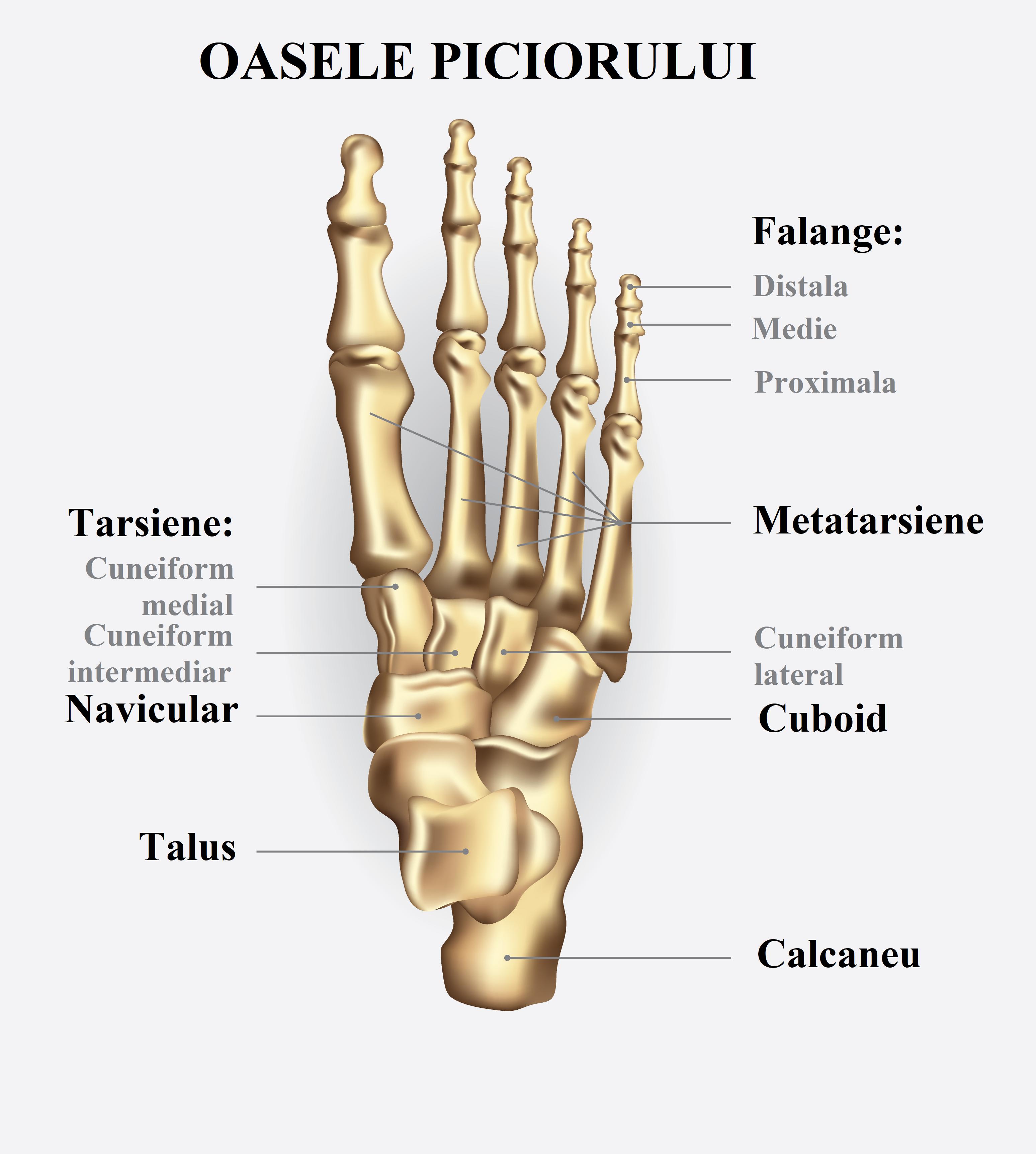 bioptron și tratamentul artrozei genunchiului menisc de refacere a articulației genunchiului