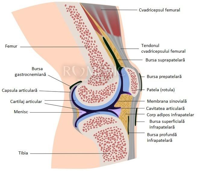 articulația genunchiului doare 3 luni