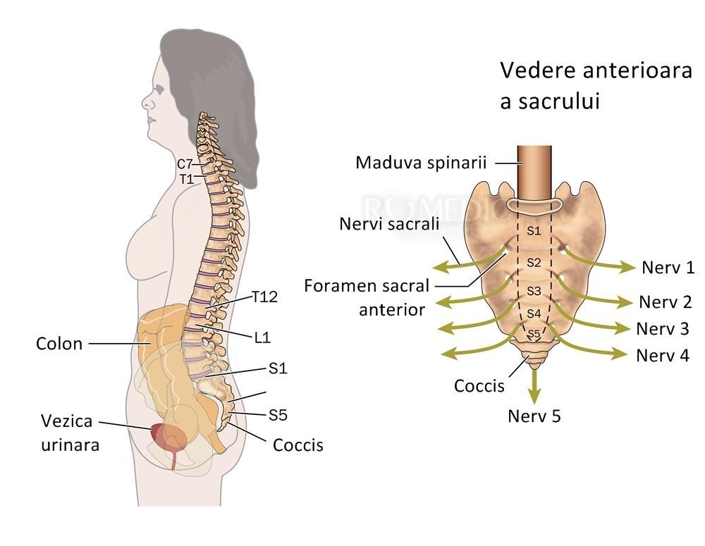 durere la nivelul coloanei vertebrale în articulațiile coastelor