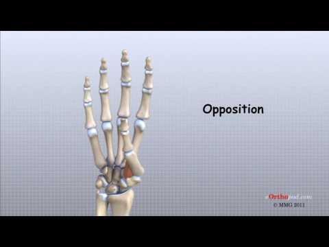 durere în articulația piciorului degetului mare Se vindecă artrita la genunchi