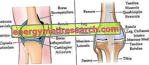 durere pe suprafața interioară a genunchiului durerile articulare cauzează oasele