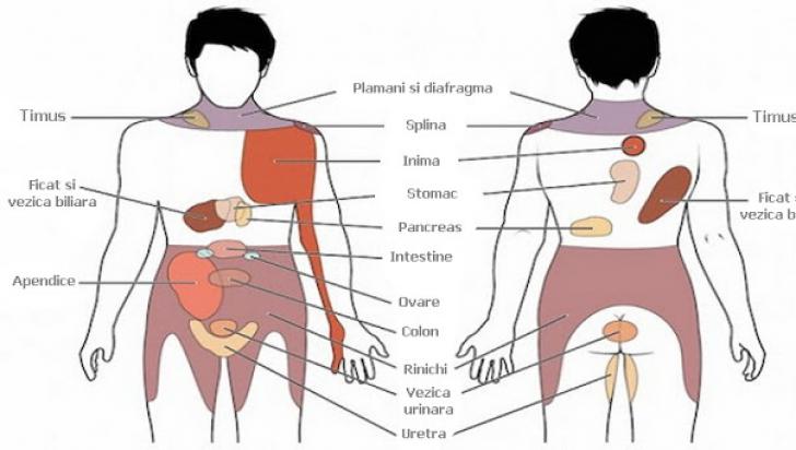 durere în articulațiile mâinilor care radiază spre omoplat ce vitamine pentru inflamația articulară