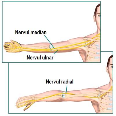 durere osoasă radială în articulația cotului