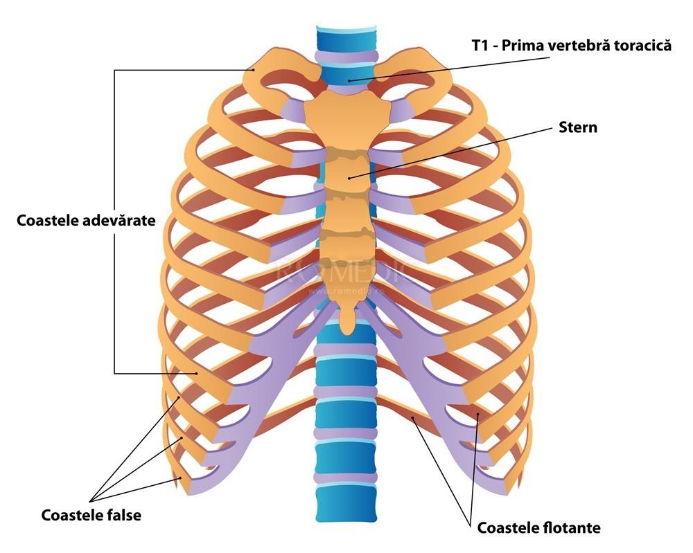 durere la nivelul coloanei vertebrale în articulațiile coastelor tratamentul cu argilă pentru artrită și artroză