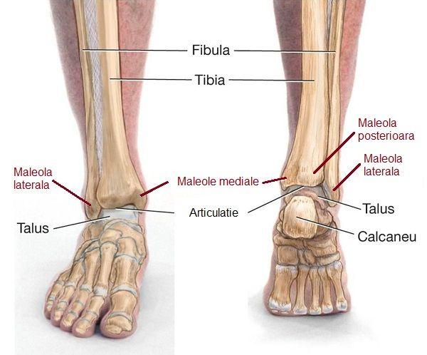 cum să ungi picioarele pentru dureri articulare articulațiile genunchiului inflamate ce să facă