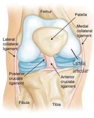 Ketorol pentru dureri în articulația genunchiului refacerea mobilității articulare și ameliorarea durerii