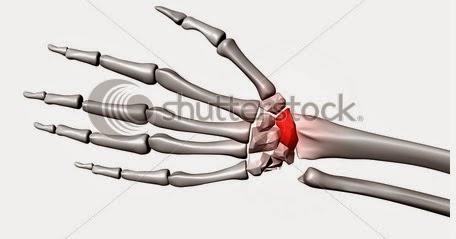 tratamentul fracturilor de umăr de unde pot cumpăra medicamente în articulații