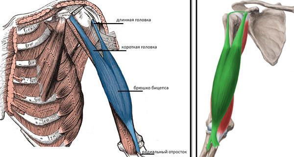 articulațiile mâinilor rănite până la coate semne de leziuni la genunchi